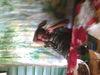 See ranga's Profile